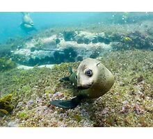 Seal, Montague Island, Australia Photographic Print