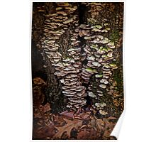 Shelf Fungus In Autumn Poster