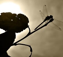 Dragonfly Silhouette by Ljartdesigns