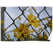 Flowers in the Fence Poster
