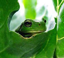 froggy peekaboo by Rebekah Kilpatrick
