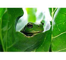 froggy peekaboo Photographic Print