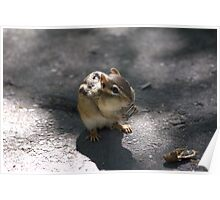 This chipmunk knew how to pull at my heart strings..LOL Poster