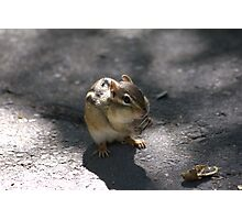 This chipmunk knew how to pull at my heart strings..LOL Photographic Print