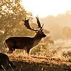Deer in Knole Park by samcmoore