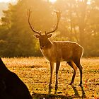 A Deer in Knole Park by samcmoore