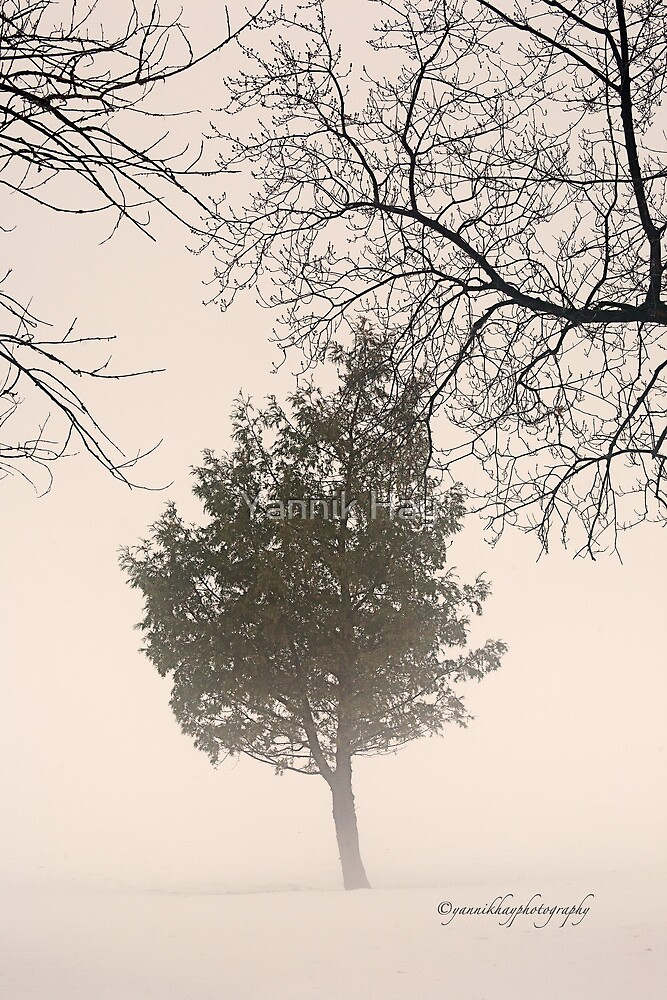 Foggy Day on Tecumseh Golf Course by Yannik Hay