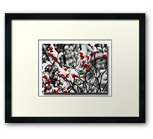 Red berries for Christmas Framed Print
