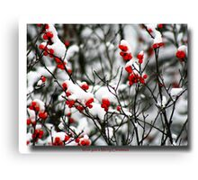 Red berries for Christmas Canvas Print