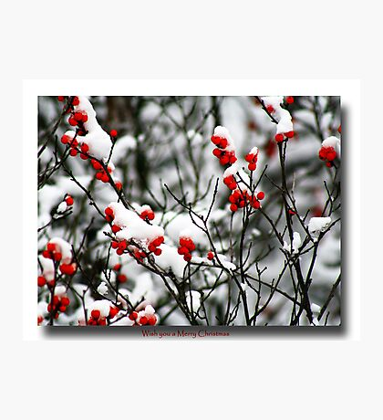 Red berries for Christmas Photographic Print