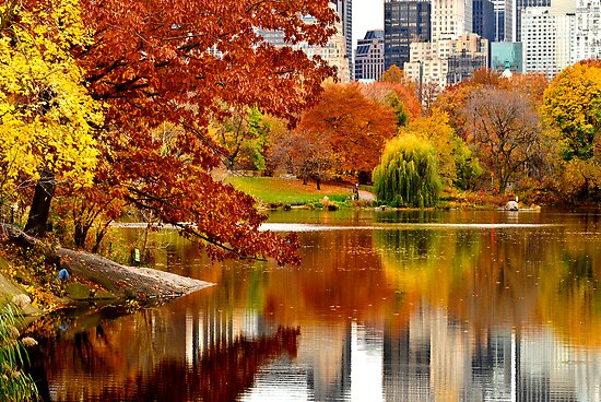 Autumn Colors in Central Park ~ New York City ~ USA by Sabine Jacobs