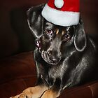 Santa's Helper by Ticker