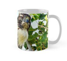 Red Tailed Hawk Mug