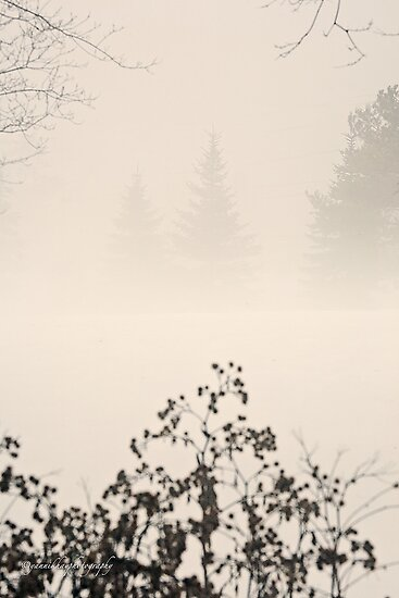Thick Winter Fog  by Yannik Hay