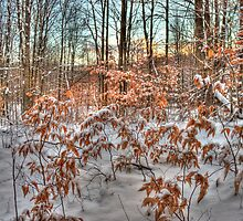 Beech Saplings by Megan Noble