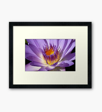 Water lily (macro), Gold Coast, Queensland Framed Print