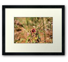 Oklahoman Wildflower Framed Print