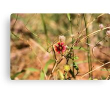 Oklahoman Wildflower Canvas Print
