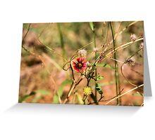Oklahoman Wildflower Greeting Card