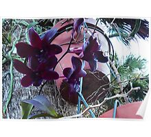 Hanging Orchids Poster