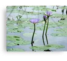 A water lily pond, Gold Coast, Queensland Canvas Print