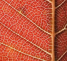 Red Leaf Abstract by Dan Lauf