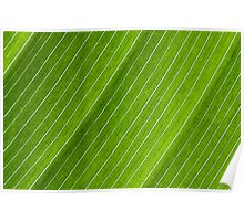 Green Striped Leaf Poster