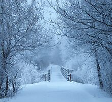 Winter Blues by lorilee