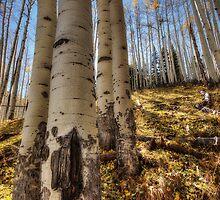 Through the Woods  by Saija  Lehtonen