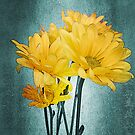 Yellow Daisies by Rozalia Toth