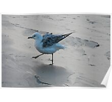 marching seagul Poster