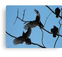 vultures spread wings Canvas Print