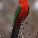 Parrot 2 by shortshooter-Al