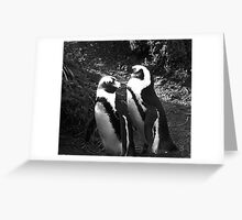 A nesting pair of African penguins bask in the early morning sun Greeting Card