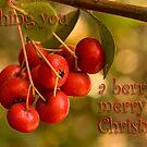 Berries 'n' bokeh - Christmas card by Celeste Mookherjee