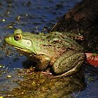 A Prince Of A Frog by Kathy Baccari