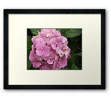 That's Not a Bee! Framed Print