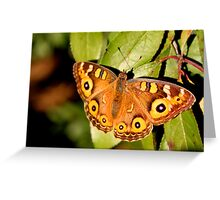 Meadow Argus Butterfly Greeting Card