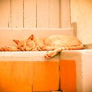 Afternoon Nap  II by EvaMarIza