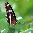 """""""Butterfly 3.0"""" by jonxiv"""