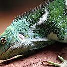 """""""Lizard"""" by jonxiv"""