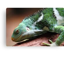 """Lizard"" Canvas Print"
