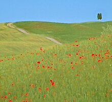 Image of Tuscan countryside by Georgina Steytler