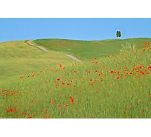 Image of Tuscan countryside Photographic Print