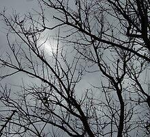 Winter Trees by WildestArt