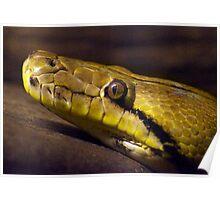 Low Light Snake closeup Poster