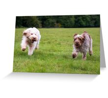 Italian Spinoni Dogs ~ Annabelle & Thane Greeting Card