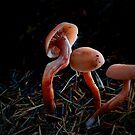 Gold Laccaria ~ Laccaria laccata ~ by Charles & Patricia   Harkins ~ Picture Oregon