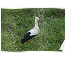 Stork 1 Poster