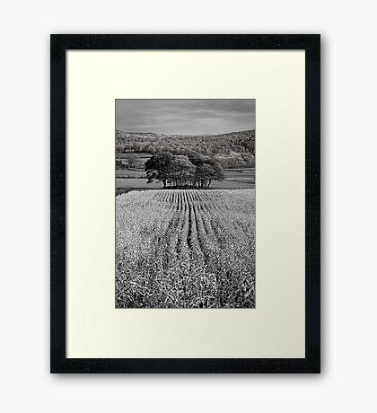 Tree Mound 01 - Cartmel Fell, Lake District, Cumbria Framed Print